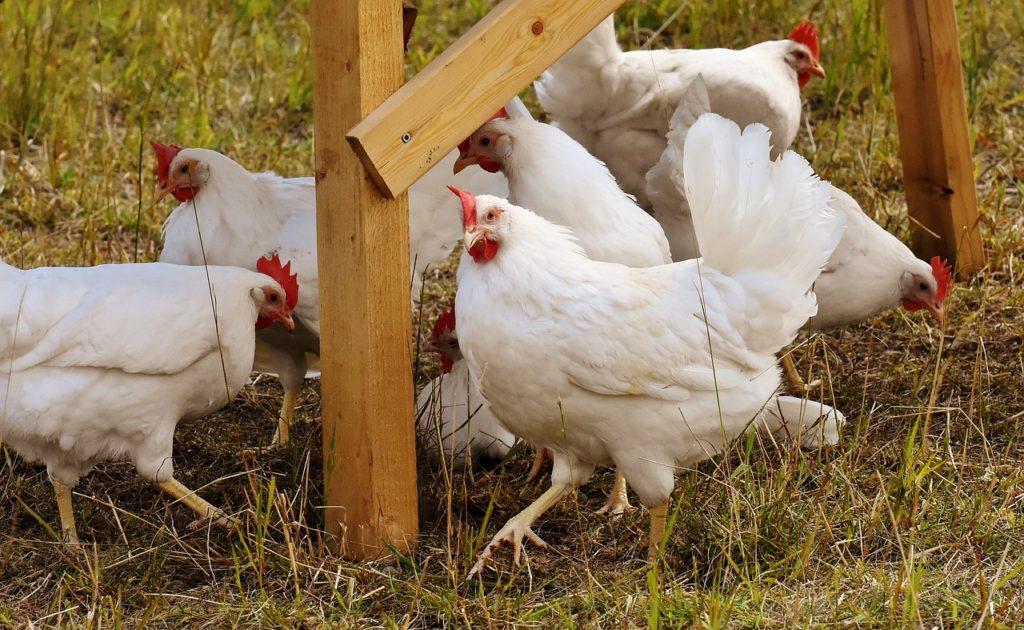 Hühnerhaus kaufen